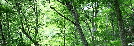2008_0617buna.jpg