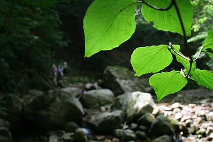 2008_1002yatsubuchiroad.jpg