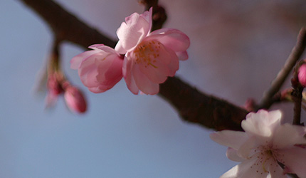 2009_0328sakura.jpg