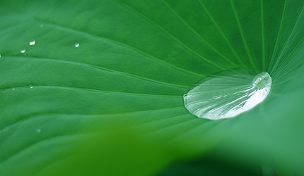 2009_0721hasu.jpg