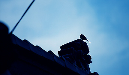 2009_1030bird.jpg