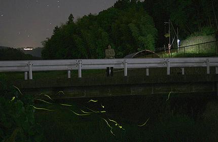 2010_0615hotaru.jpg