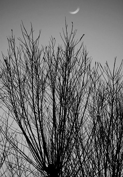2011_0303tree.jpg