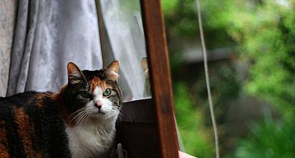2011_0529miiko2.jpg
