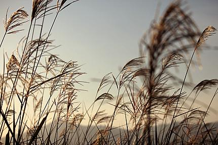 2011_1111susuki.jpg