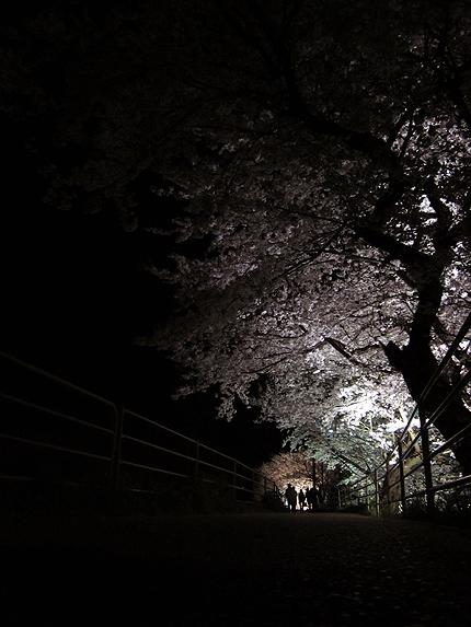 2012_0414yozakura.jpg