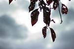 2012_1210happa.jpg