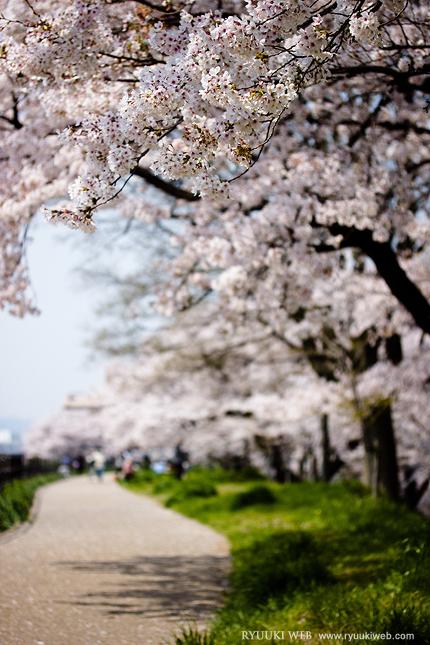 2014_0413sakura.jpg