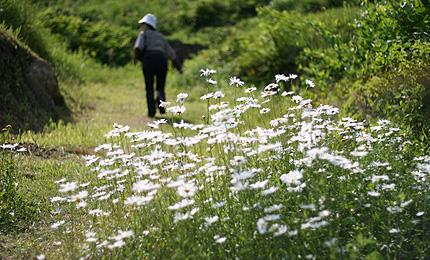 2009_0609hatahana.jpg