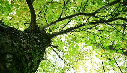 2009_1023wood.jpg