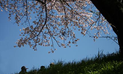 2010_0410sakura.jpg