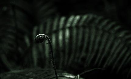 2010_0515shida.jpg