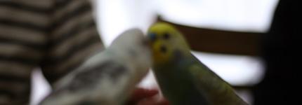 2010_0607birds.jpg