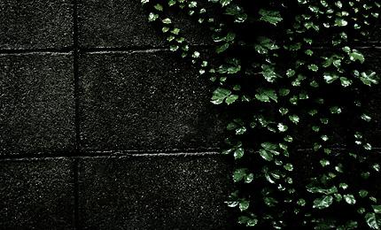 2010_0703tsuta.jpg