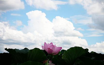 2010_0811hasu.jpg