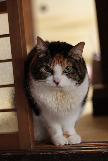 2012_0117miiko.jpg