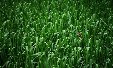 2012_0621yoshikiri.jpg