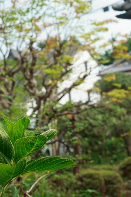 2012_0830niwa.jpg