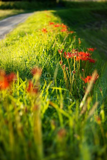2012_0926higunbana1.jpg