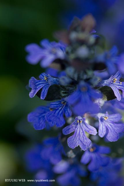 2013_0429_flower.jpg